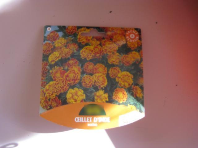 Semis d'oeillets d'Inde (22 mars 2012) dans - 15 - Semis d'oeillets d'Inde avec les Moyens oeillets-1
