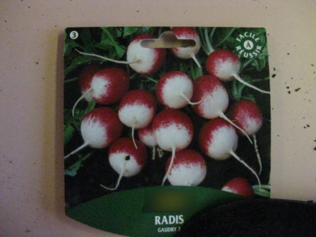 Semis de radis (27 mars 2012) dans - 16 - Semis de radis avec les Petits radis-0