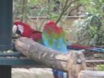 Le spectacle des perroquets