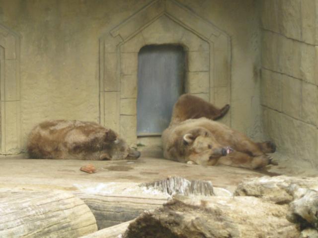 Les animaux du zoo dans - 1 - Les animaux IMG_4361